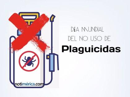 3 de diciembre: Día Mundial del No Uso de Plaguicidas, ¿qué representa esta fecha?