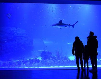 Atlantis Aquarium, primer acuario interactivo de Europa inspirado en el cambio climático
