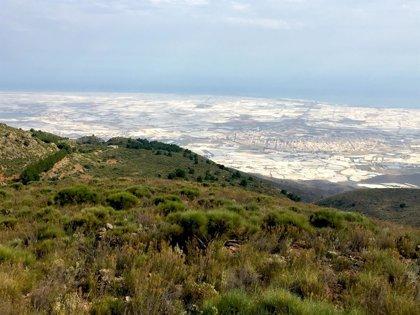 VOX es segunda o tercera fuerza en 30 municipios de Almería, con especial incidencia en el Poniente