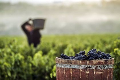 Cerca de 300 bodegas de Rioja rechazan la ampliación de cuotas de la OIVE hasta el año 2024