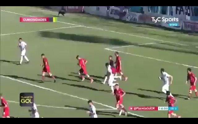 Un perro aparece en el terreno de juego en mitad de un partido y en el momento justo para salvar un gol