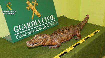 La Guardia Civil recupera especímenes de más de 14 especies protegidas de fauna silvestre en Bizkaia