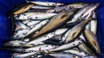 Coure el peix redueix a la meitat un contaminant present en el medi ambient
