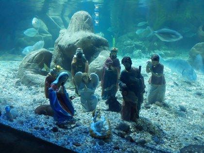 Rayas y tiburones adoran el belén submarino del Sea Life Benalmádena