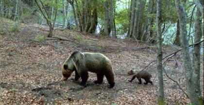 El Gobierno de Aragón pone en marcha un proyecto para gestionar datos de biodiversidad