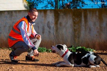 Noguera pide a los grupos parlamentarios reducir los tiempos de espera en centros de acogida de animales