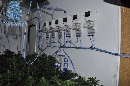 Desmantelan un punto de cultivo de marihuana en San Juan de Aznalfarache (Sevilla) y detienen a tres personas