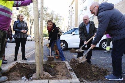 El Ayuntamiento de Sevilla planta en un mes 1.176 árboles, casi la cuarta parte de los 5.100 previstos en esta campaña