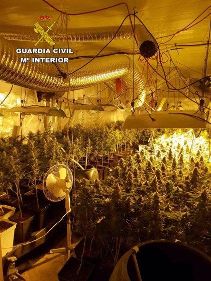 Detenido un hombre en Ibiza por mantener unaplantación de marihuana en el interior de su vivienda