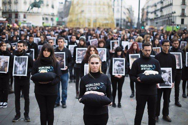 Unos 500 activistas de Igualdad Animal mostrarán animales muertos