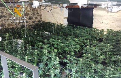 Intervenidas casi 1.000 plantas de marihuana en Pesaguero y Ajo