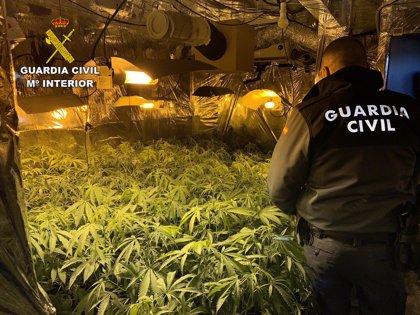 Detienen a tres personas y desmantelan una plantación de marihuana en Hontoba