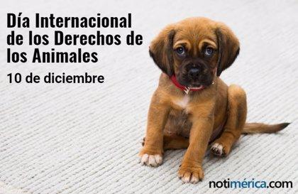 10 de diciembre: Día Internacional de los Derechos de los Animales, ¿cuál es el motivo de esta efeméride?