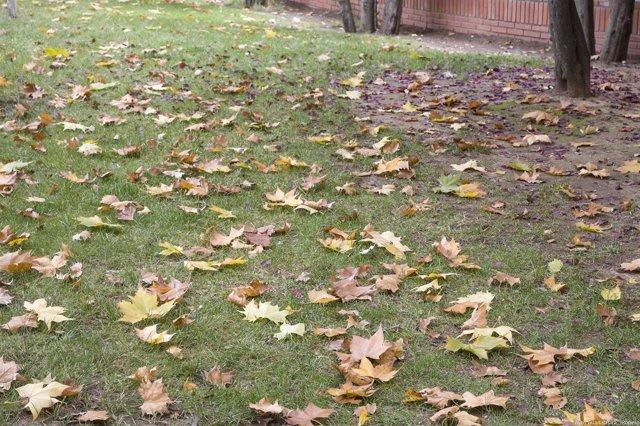 Hojas de árboles en el suelo en otoño