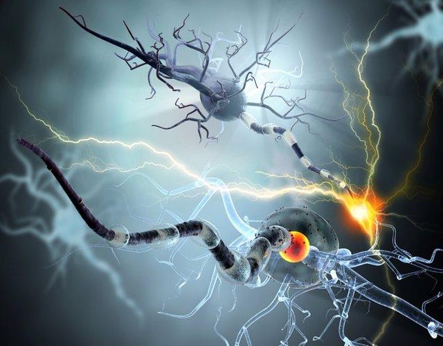 Cerebro, epilepsia