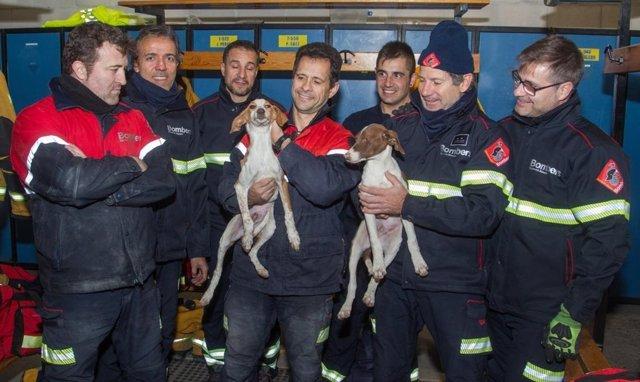 Perritos rescatados en una tubería en Alicante