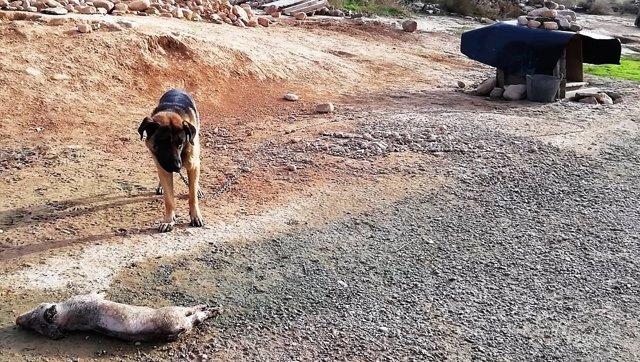 """Animal """"maltratado"""" en Rioja Baja"""