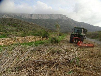 ANSE sustituye parte de la caña invasora por arbustos autóctonos en el espacio protegido de La Muela-Cabo Tiñoso