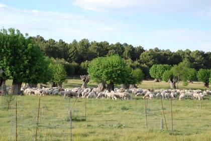 La Comunidad, declarada región indemne de brucelosis bovina, ovina y caprina