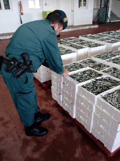 Intervenidos más de 2.600 kilos de boquerón inmaduro en la lonja de Motril (Granada)