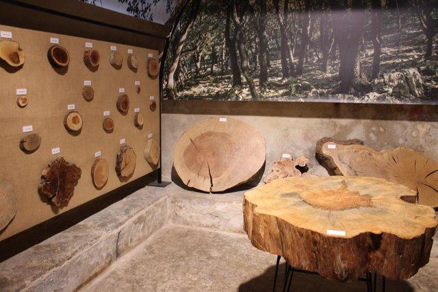 El Centro Forestal de Menut