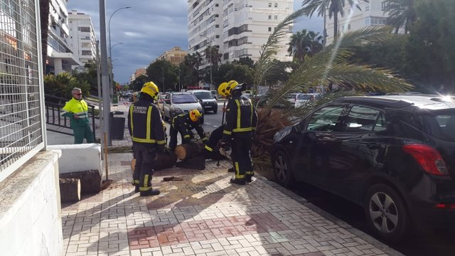 Bomberos de Málaga intervienen por fuerte viento caída palmera golpea a mujer