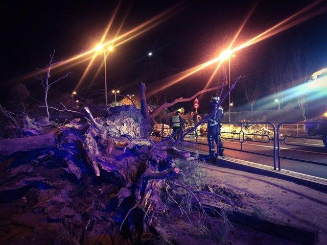 Dos heridos al caer un árbol sobre un turismo en Boadilla del Monte