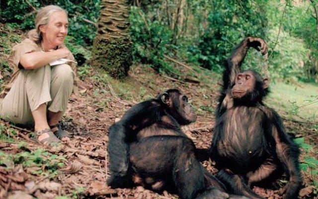 Día del Mono