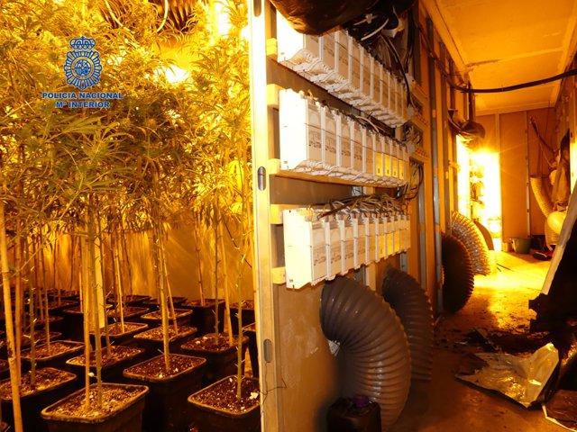 Plantación en Alaquàs