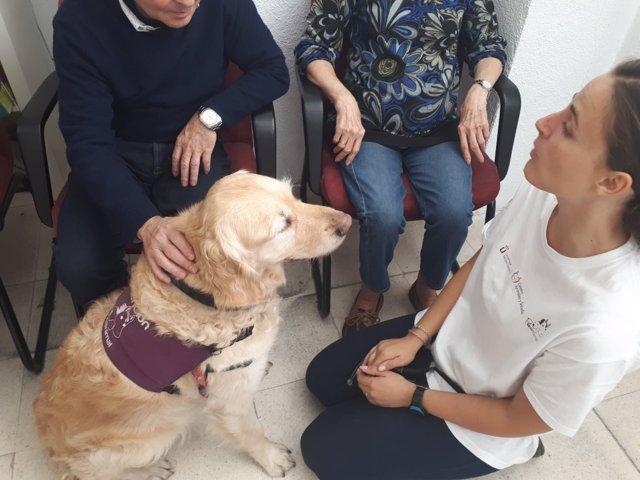 Perro en una terapia con personas con Alzheimer
