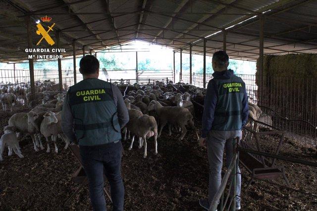 La Guardia Civil investiga robos en el campo