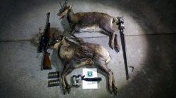 Els Agents Rurals denuncien uns caçadors furtius per abatre dos isards al Ripollès (ACN)