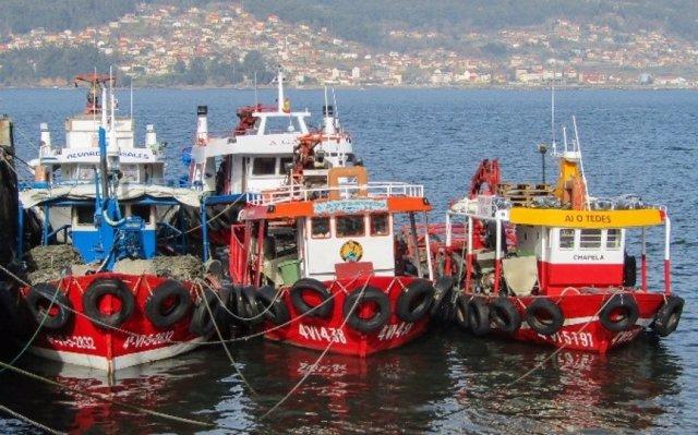 ONG y pescadores piden a la UE que respete las recomendaciones científicas para fijar las cuotas de pesca de 2019
