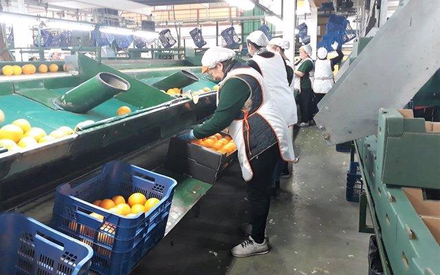 Los empleados de la subasta de Agroponiente desconvocan la huelga tras alcanzar un acuerdo con la empresa