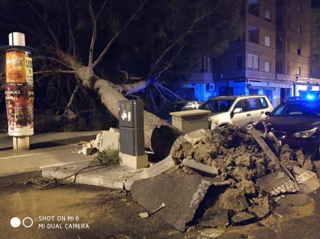 Caída de un árbol por viento
