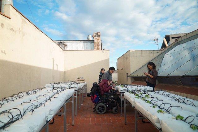Huerto urbano en un edificio municipal de Barcelona