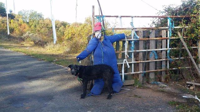 Perro para contener el ganado rescatado por APA Rioja