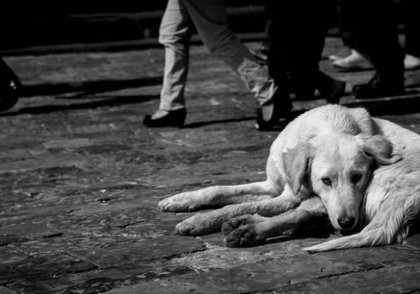 """Legalizan matar a perros callejeros que """"estorben el tránsito y rompan bolsas de basura"""" en un municipio de Argentina"""