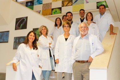 Investigadores de Cabimer trabajan en prevención de problemas neurológicos asociados a radioterapia en niños con cáncer