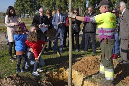 Ayuntamiento de Sevilla planta 60 tipuanas en la ampliación del parque Guadaíra