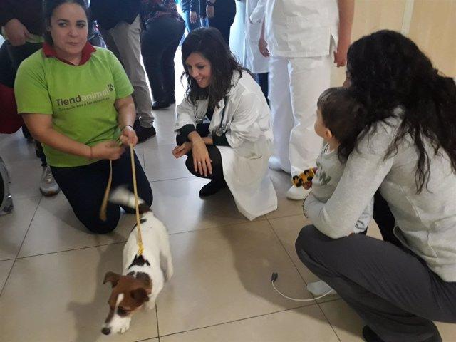 Perros terapéuticos pacientes hospital quirónsalud málaga navidad estancia ingre