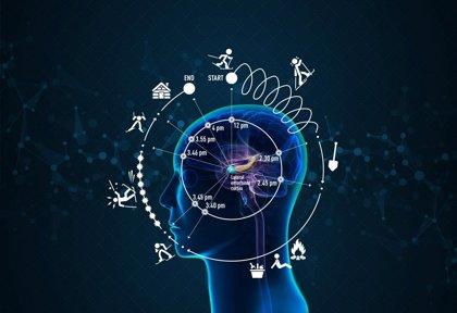 El estatus socioeconómico da forma al cerebro en desarrollo