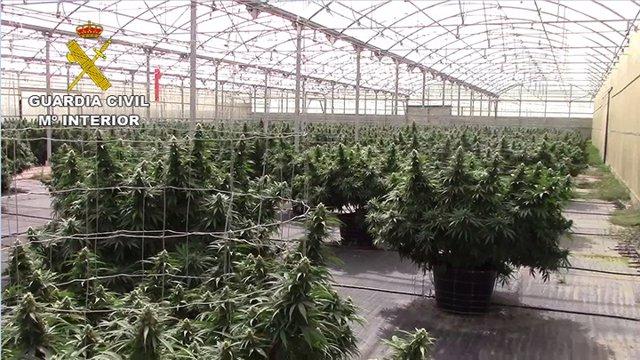 Nave donde se encontraron las plantas de cannabis sátiva en Tauste
