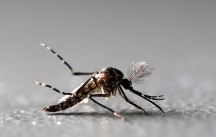 El Ministerio de Salud de Perú emprende acciones tras dos muertes por dengue en los últimos días