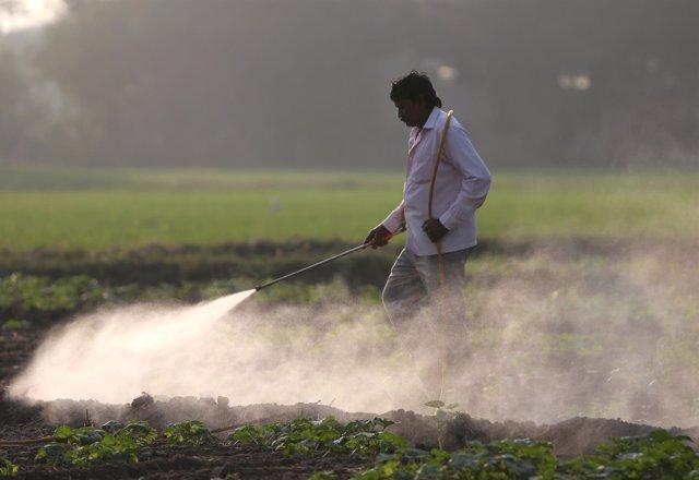 Un granjero fumiga un campo de Ahmedabad