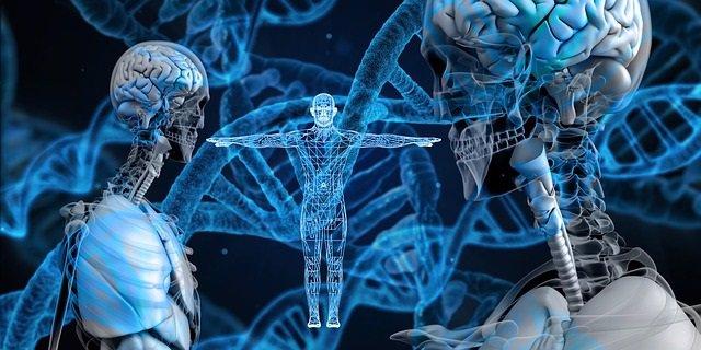 Adn, epigenética