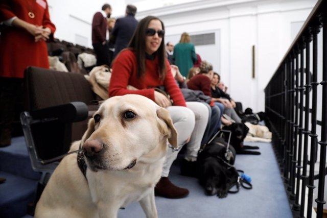Perro Guía en el Pleno de las  Cortes