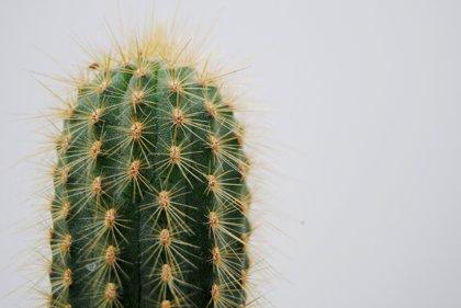 Cactus y escarabajos inspiran cómo recolectar agua en el desierto