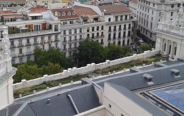 Árboles en Madrid