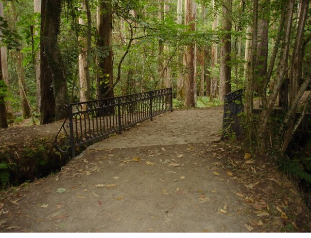 Eucaliptal de Chavín eucalipto bosque